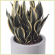 Wedding Plant Displays, Christmas Displays and Interior Plants